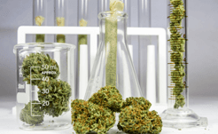 Le processus d'extraction du CBD